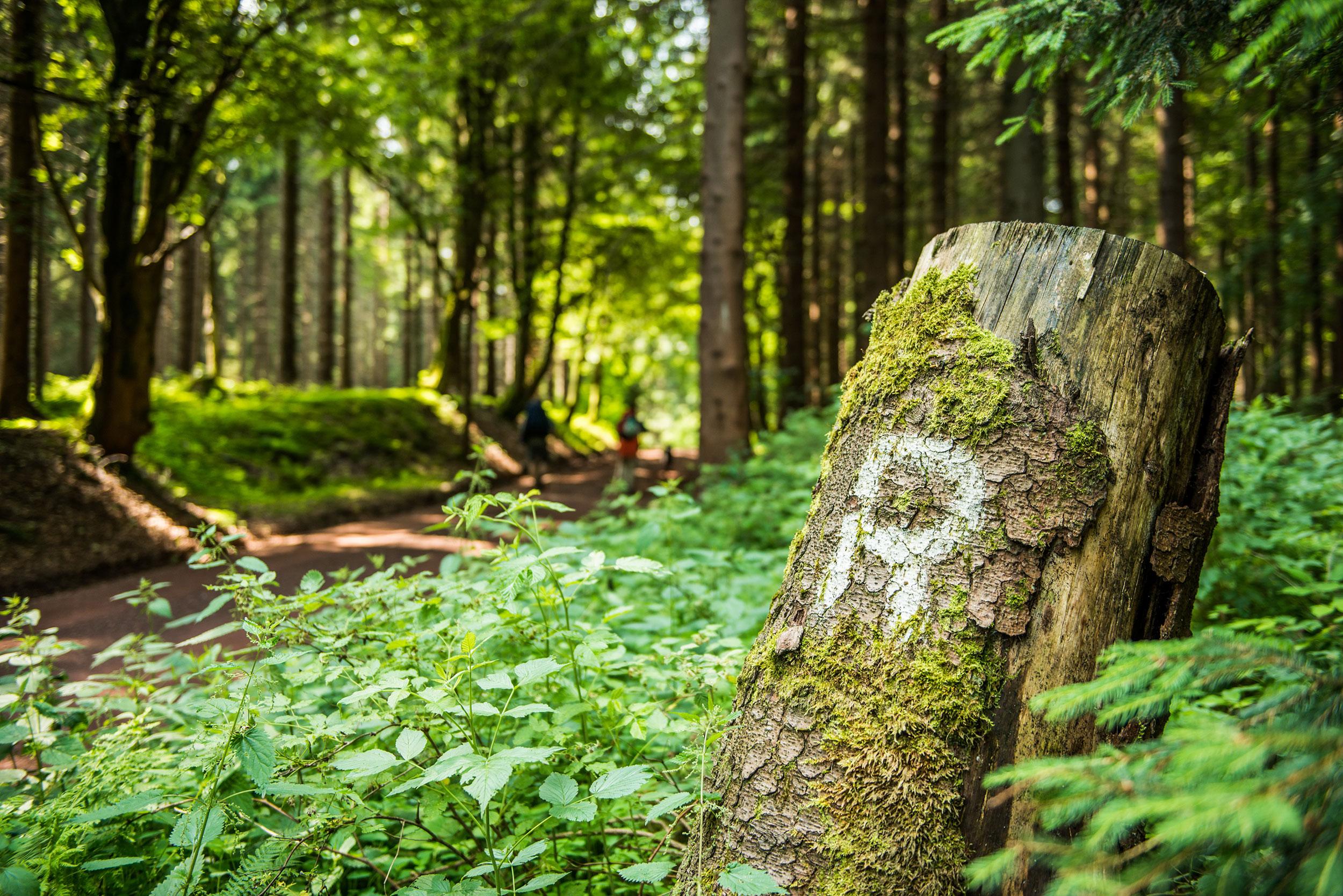 Eisenach Natur – Rennsteig