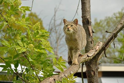 Nationalpark Hainich – Wildkatzendorf Hütscheroda